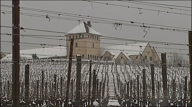 Snow makes winery a winter wonderland