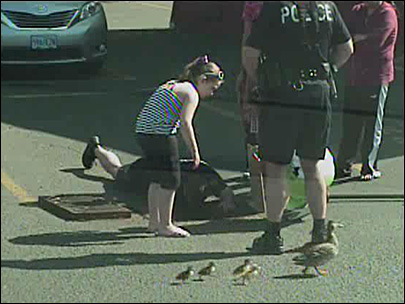 Caught on dash cam: Ducklings rescued from storm drain