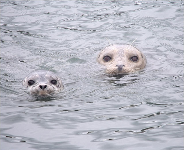 Keep your distance from baby seals
