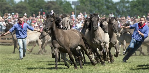 Germany Wild Horses 