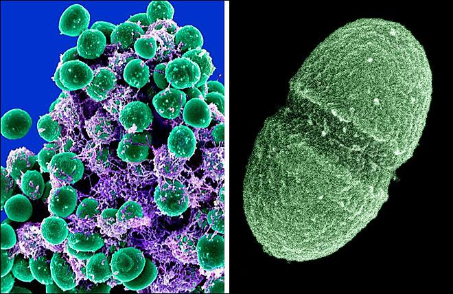 Healthy? 10,000 germ species still call your body home