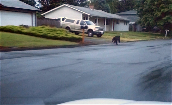 Teen chases down a bear: 'It's a (bleeping) bear, you guys!'