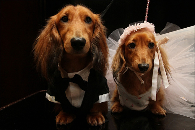 2 dogs &#39;wed&#39; at NYC charity extravaganza