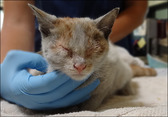 Chinese kitten stows away on LA-bound freighter