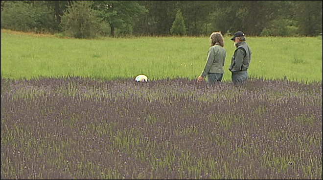 Laid back at the Oregon Lavender Festival