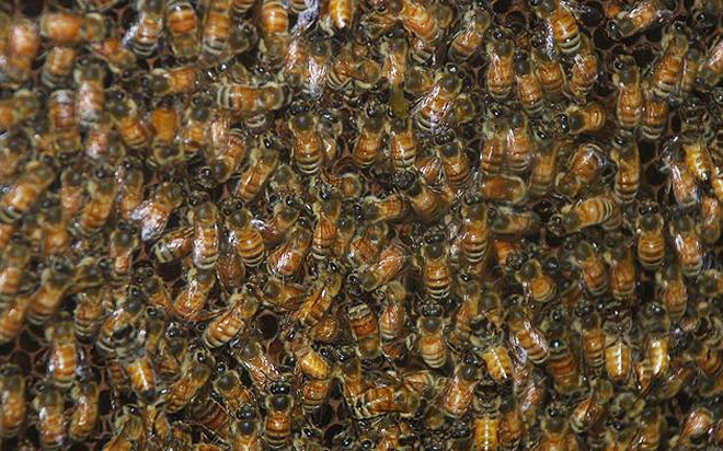 Swarm of thousands of bees delays Pittsburgh flight