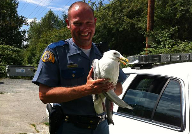 Trooper saves injured seagull from middle of freeway
