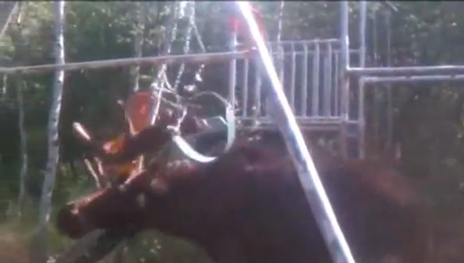 Utah deputy frees moose stuck in chains of swing