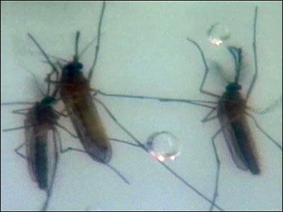 Two cases of West Nile virus confirmed in Ore.