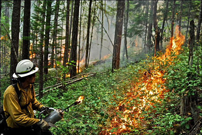 Fire crews are working hard to contain Oregon's wildfires