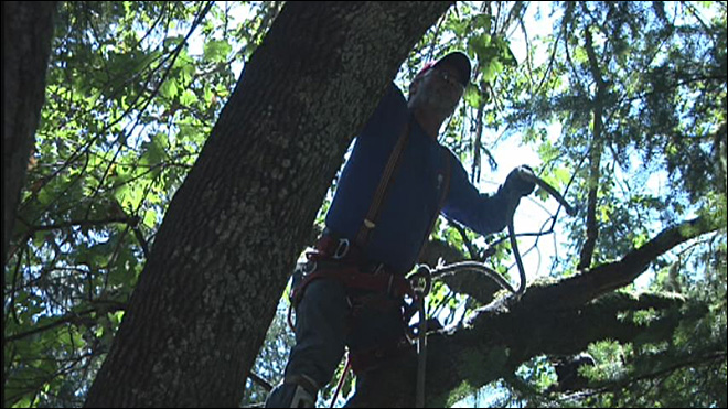 'Spider Man' saves cat stuck in tree