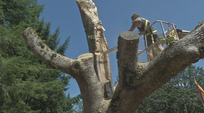 Tree Carver: 'Every stump has worth'