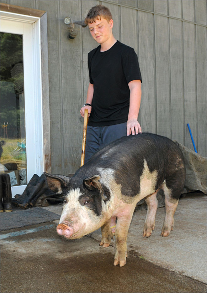 Family&#39;s pig recovers from highway fall