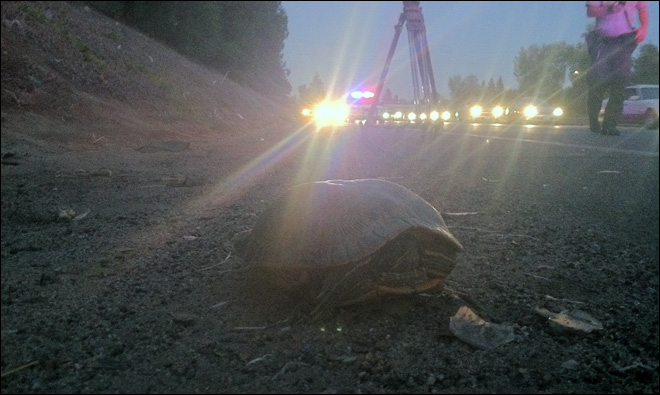 Hundreds of turtles found on side of California highway