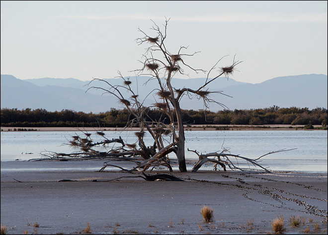 Salton Sea eyed as culprit of big stink in Calif.
