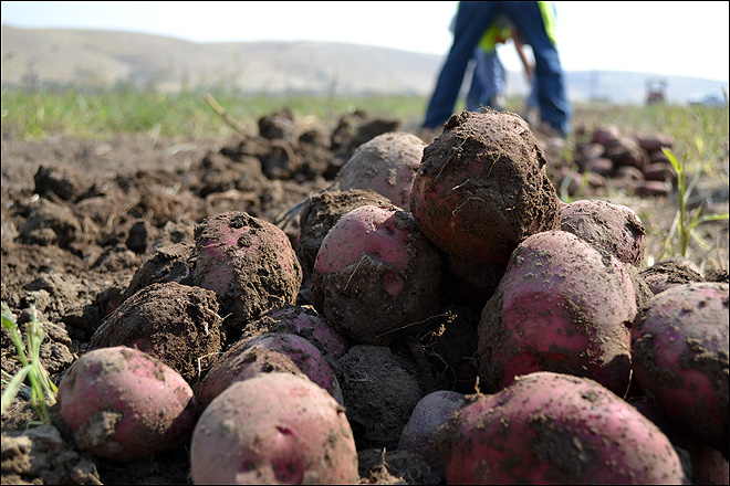 Oregon drone mission: Keeping spuds happy