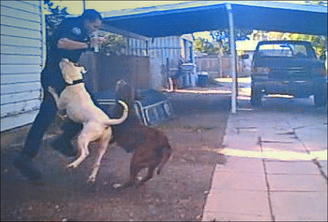 Caught on camera: Dogs attack police officer