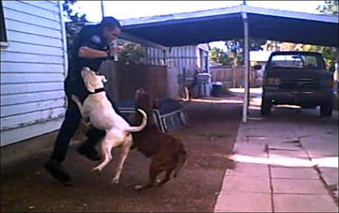 Graphic Video: Dogs attack police officer