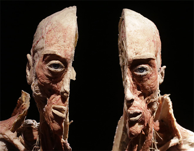 APTOPIX Italy Body Worlds Exhibition