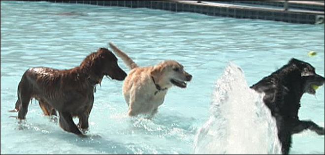 Pups splash, play as pool season ends