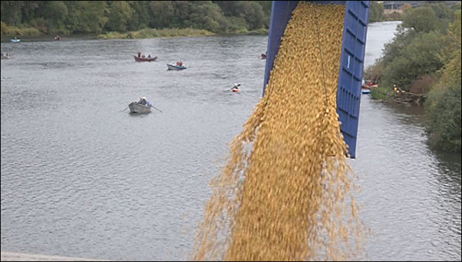 Burnin' rubber: thousands of ducks race down the Willamette
