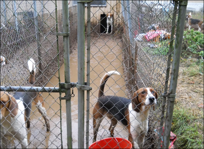 Dozens of dogs in 'deplorable conditions' taken from Wash. home