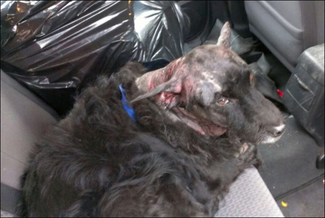 Dog survives mountain lion attack in Idaho