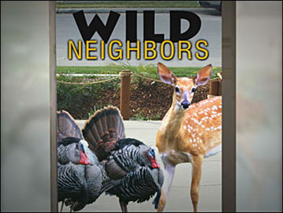 Oh, deer! Time to talk turkey about urban wildlife