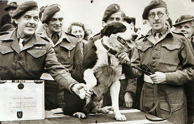 Britain Hero Animals
