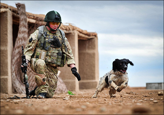 Dog joins list of animal war heroes
