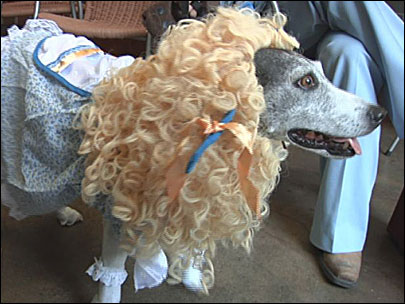 Dogs (and their owners) celebrate 'Howloween'