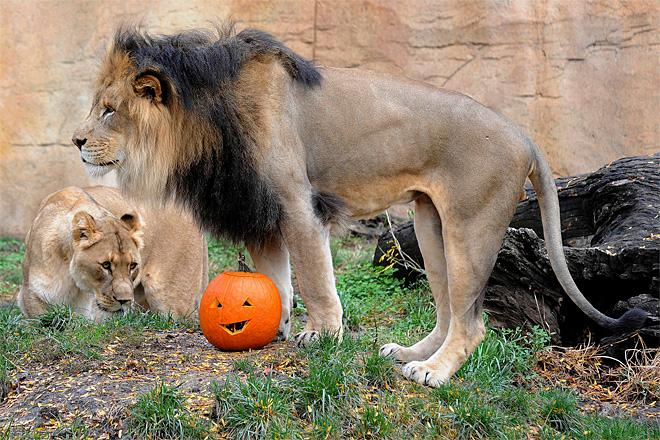 Brookfield Zoo Halloween Treat