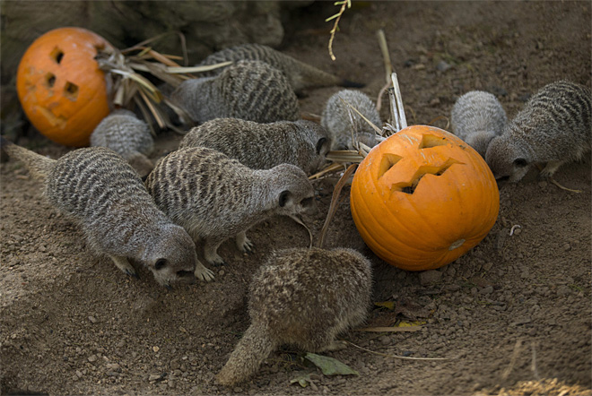 Britain Halloween Zoo