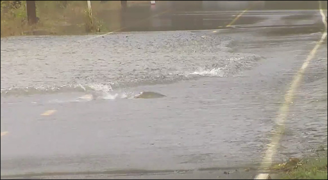 Video: Why did the salmon cross the road?