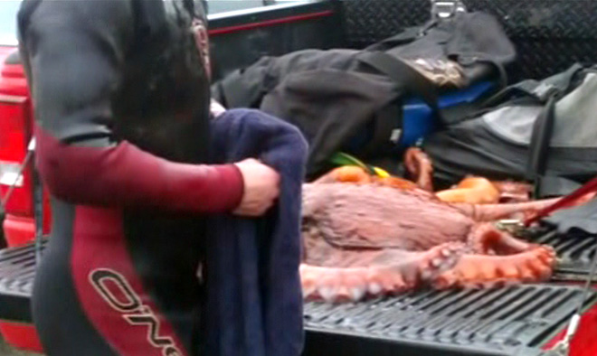Local divers outraged over killing of octopus