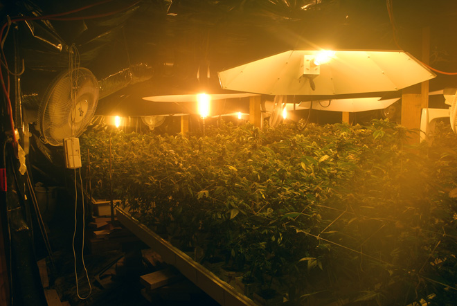 Pot town pushes back against industrial growers