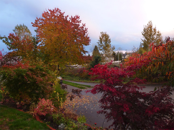 Northwest Autumn