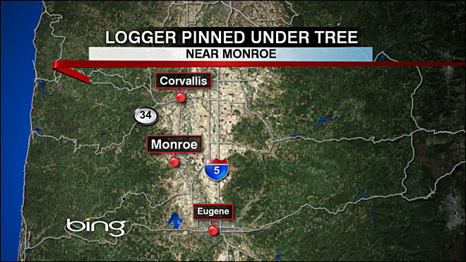 Tree pins logger for 3 hours before rescue