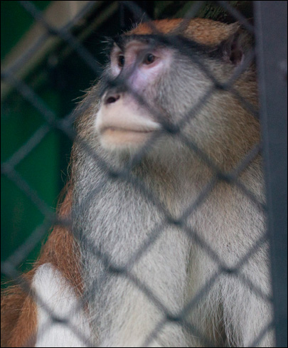 Monkey killed by intruders after Boise zoo break-in