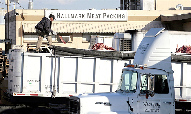 Calif. slaughterhouse to pay $300,000 in settlement