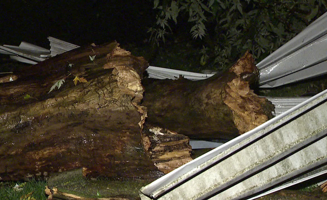 Tree smashed Southeast Portland home.