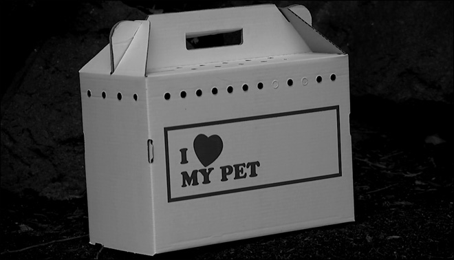 'I was outraged': Animal mailed to postal office in cardboard carrier