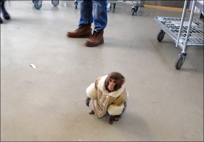 Owner protests to get pet monkey back