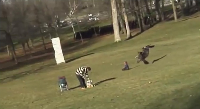Creators of viral eagle snatching video admit hoax