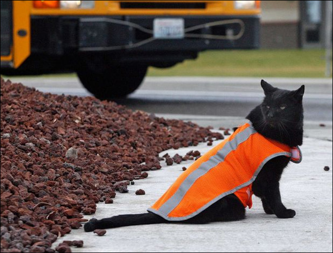Crossing guard cat watches out for Wash. students