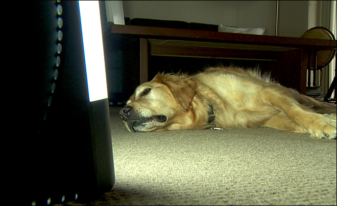 'SAD' pets now have their own light to boost a blue mood
