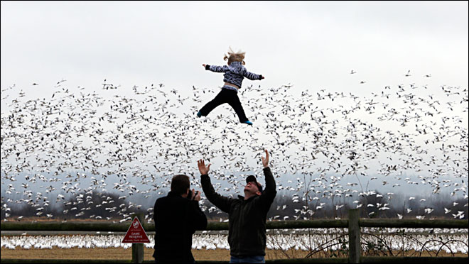 Thousands of snow geese delight bird watchers of all ages