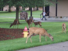 The Wonderful Wildlife at UCC