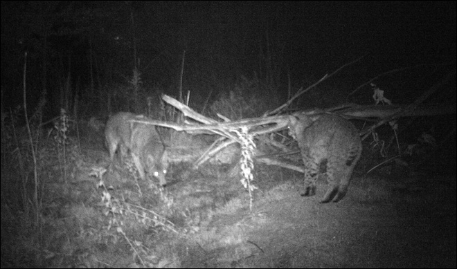 13. Critters caught on camera in Boise backyard