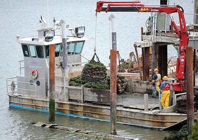 Oysters: Federal vessel sets sail to study ocean acidification